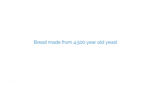 Bread made from 4,500 year old yeast
